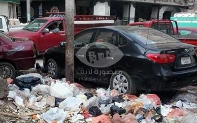 اكوام قمامة واسراب ذباب وحيوانات نافقة بشوارع وميادين المنصورة